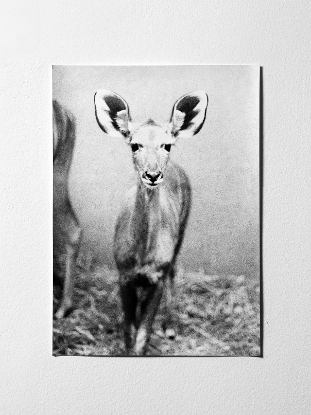 Jochen Lemberg Untitled (Antilope), 2008 Courtesy of the artist and ProjecteSD, Barcelona
